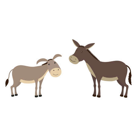 Donkey and mule, differences. Vector illustration isolated.