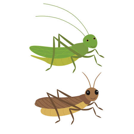 Cricket and locust, differences. Vector illustration isolated.
