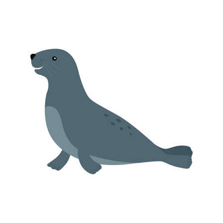 Sealion. Vector illustration isolated on white background.