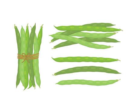 Fresh green beans vegetables. Vector illustration isolated