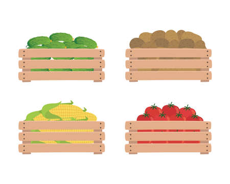 Vegetables in wooden boxes, isolated on a white background. Tomatoes, potatoes, corn and cucumbers. Illustration of organic food.  イラスト・ベクター素材