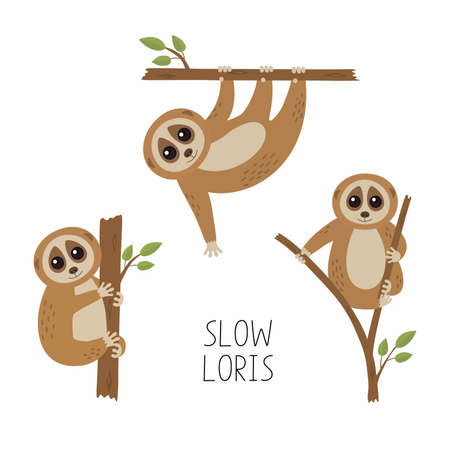 Set of loris on tree branches. Cute lorises vector illustration collection. 向量圖像