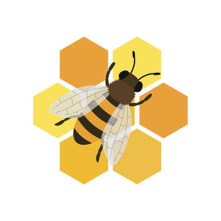 Bee and honeycombs. Vector illustration isolated on white background.