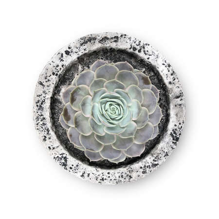 Succulent plants in a pot isolated on white background