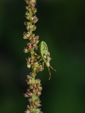Insects adapt to the green branches. Macro Close up.