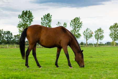 portrait of horse in the grass