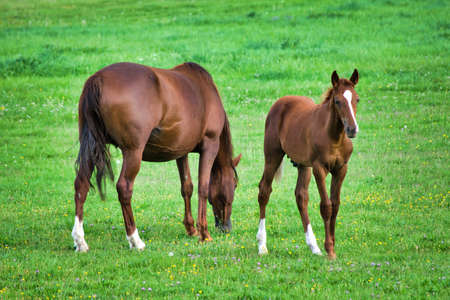 portrait of horse with his baby