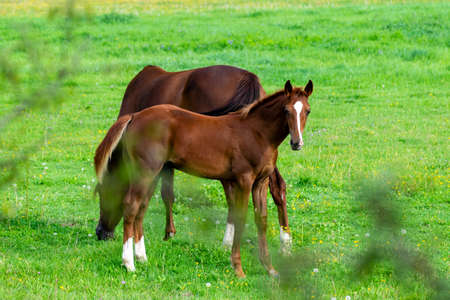 portrait of baby horse in the grass