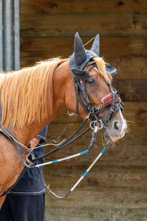 horse racing hippodrome of feurs