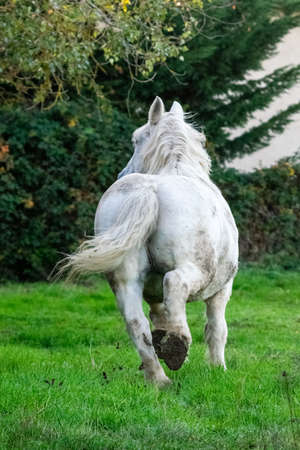 portrait of white horse in the grass Reklamní fotografie