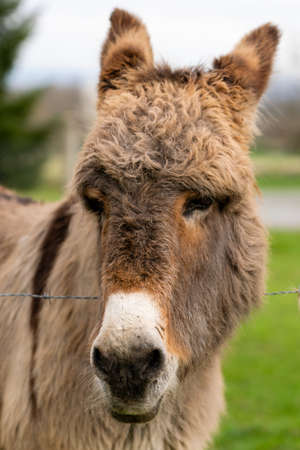 portrait of donkey in pasture