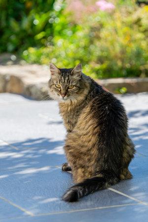pet animal: portrait of alley kitten Stock fotó