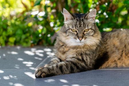 pet animal: portrait of alley cat