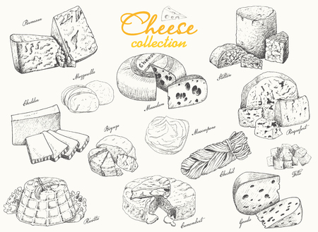 A collection of various cheeses. Vector illustration for your design