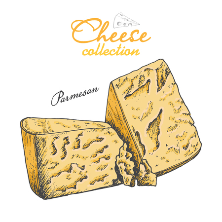 Vector background with cheese  イラスト・ベクター素材