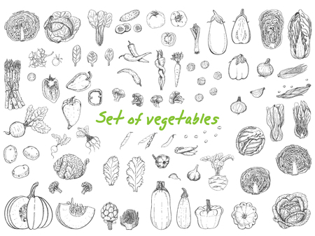 Big set with vegetables in sketch style. Healthy food