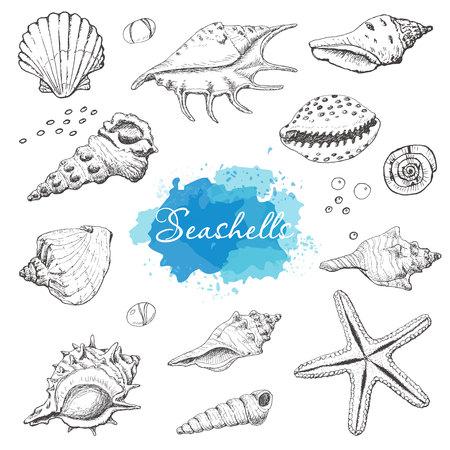 Isolated seashells on a white background.