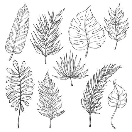 Set of tropical leaves. Vector illustration for your design