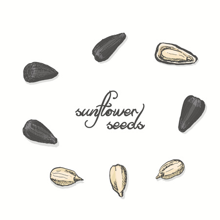 Isolated sunflower seeds on a white background. Vector illustration for your design
