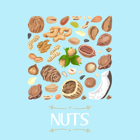 Isolated square of nuts and seeds. Vector illustration for your design