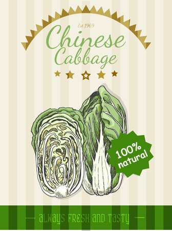 Vector poster with a chinese cabbage in a sketch style. Vector illustration for your design