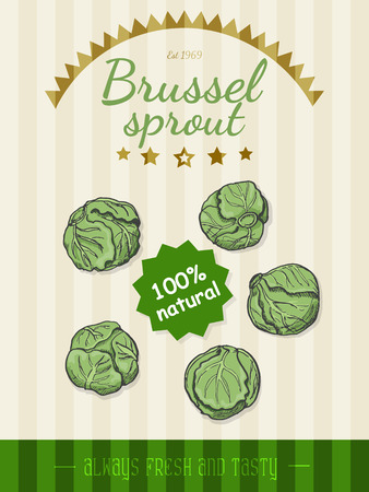 Vector poster with a Brussels sprouts in a sketch style