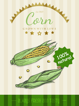 Vector poster with a corn in a sketch style