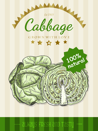 Vector poster with a cabbage in a sketch style