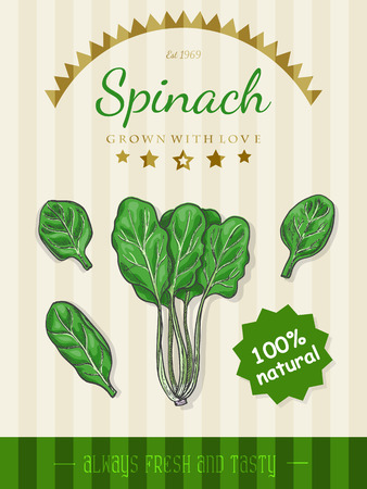 Vector poster with a spinach in a sketch style Иллюстрация