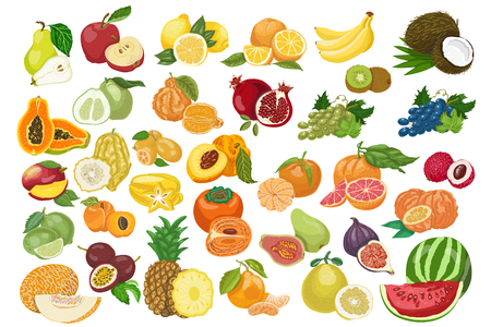 Big collection of isolated fruits. Vector illustration for your design