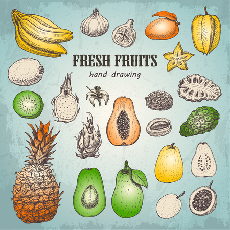 Set of fresh tropical fruits in sketch style. Vector  illustration for your design 版權商用圖片 - 122749512