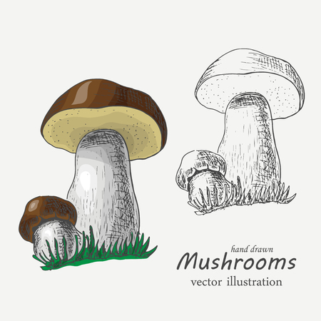 Graphic and colored mushrooms. Vector  illustration for your design 向量圖像