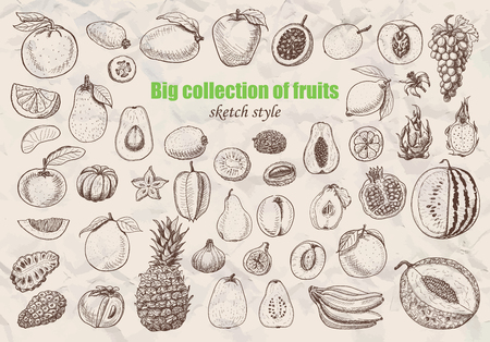 Big collection of fruits in sketch style. Vector illustration for your design