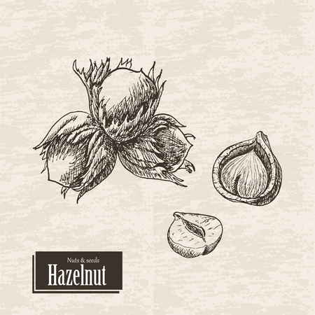 Vector background with hazelnut. Vector  illustration for your design