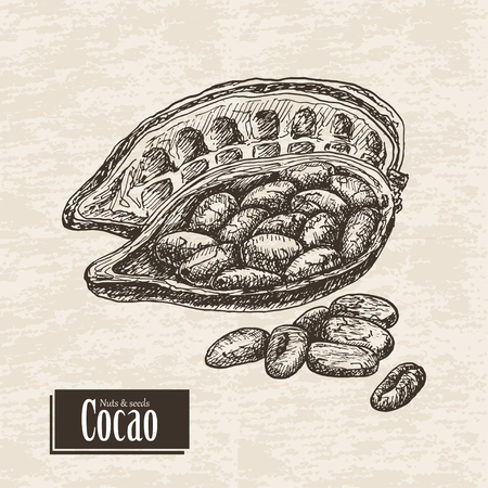 Vector background with cocoa fruit. Vector  illustration for your design Standard-Bild - 122749569