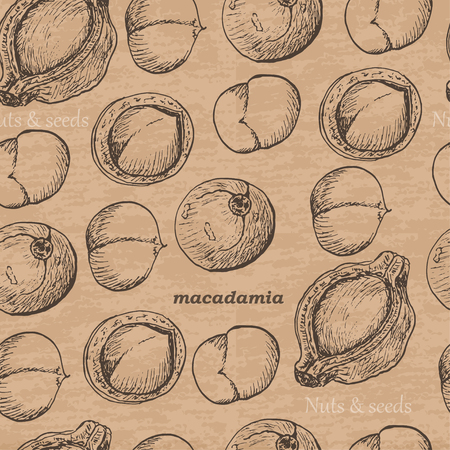 Seamless pattern with macadamia on a vintage background. Vector illustration for your design Vector Illustration