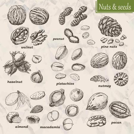 Collection de noix et de graines. Vector illustration pour votre conception