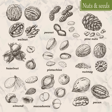 Collection of nuts and seeds. Vector  illustration for your design Ilustrace