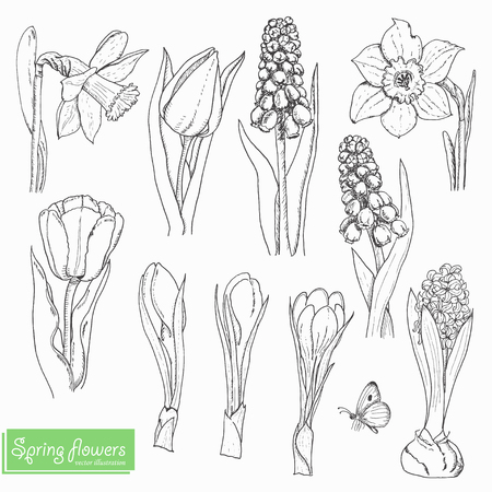 Set of isolated spring flowers on a white background. Vector  illustration for your design