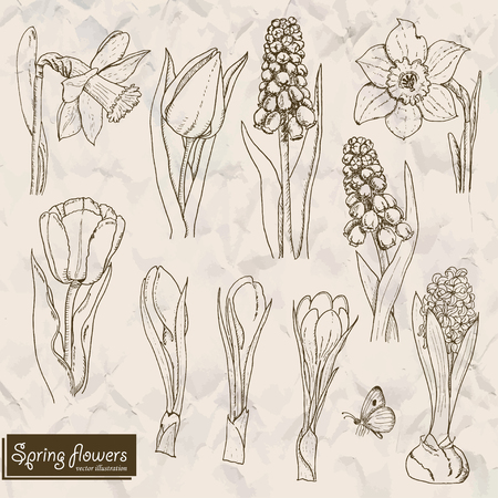 Set of isolated spring flowers. Vector  illustration for your design