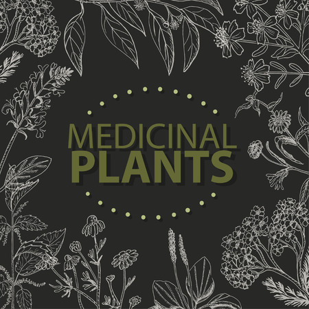 Vector background with medical herbs on a black background. Vector  illustration for your design