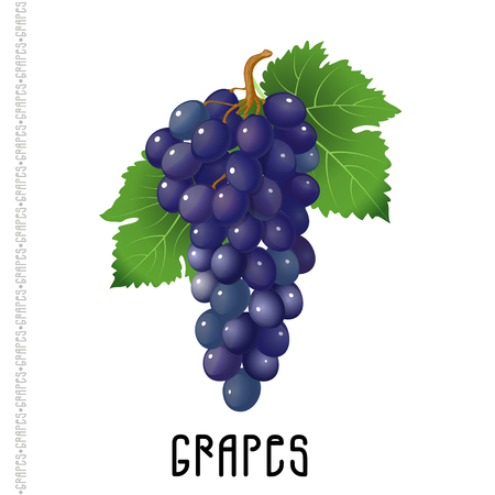 Bunch of grapes on a white background. Vector  illustration for your design Banque d'images - 122749387