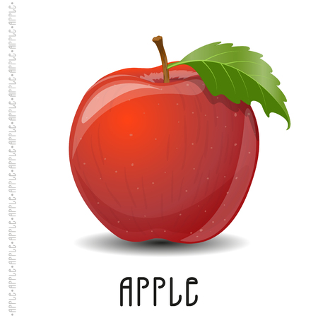 The branch of apple on white background. Vector  illustration for your design