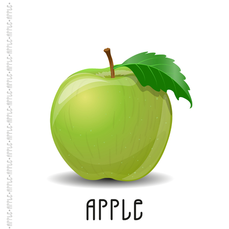 The branch of green apple on white background. Vector  illustration for your design