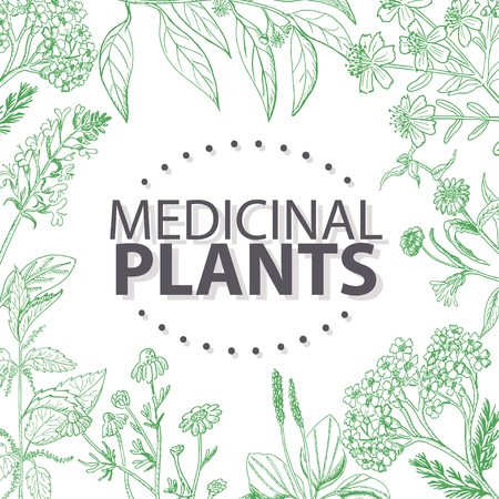 Vector background with medical herbs. Vector  illustration for your design