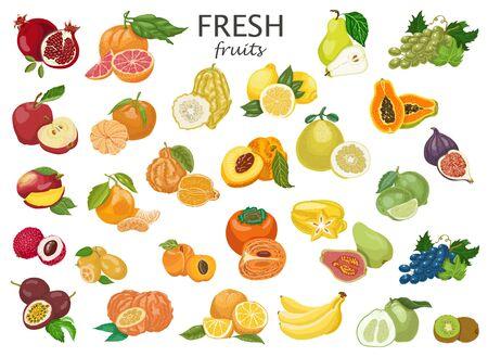 Big set of colored fruits. Ilustracja