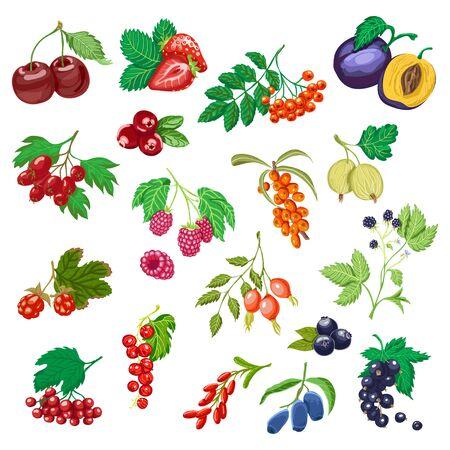 Big set of colored berries. Ilustracja