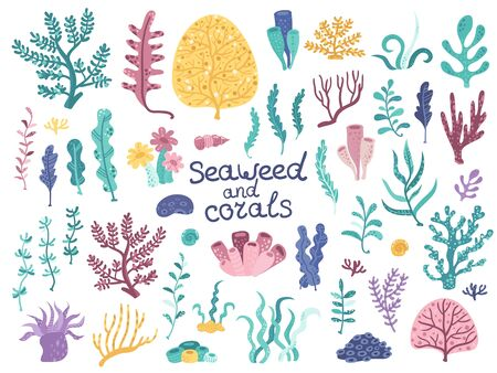 Set of vector algae and corals