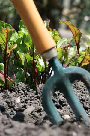 hand held: Un piccolo giardino forcella a mano, di cui il terreno