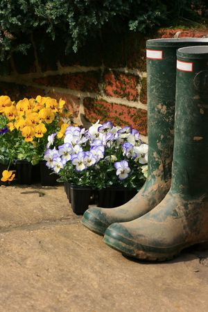A pair of muddy wellington boots on a stone patio with a bricked wall to the background. Pots of pansys set next to boots awaiting planting.